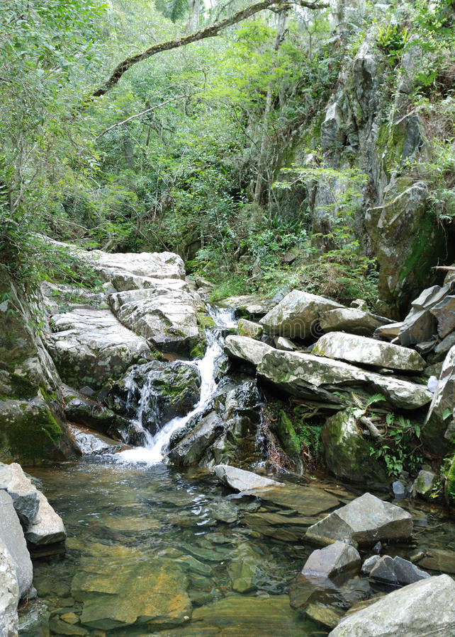 Poca cascada en bosque tropical foto de archivo
