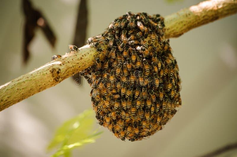Poca colmena salvaje con las abejas fotos de archivo