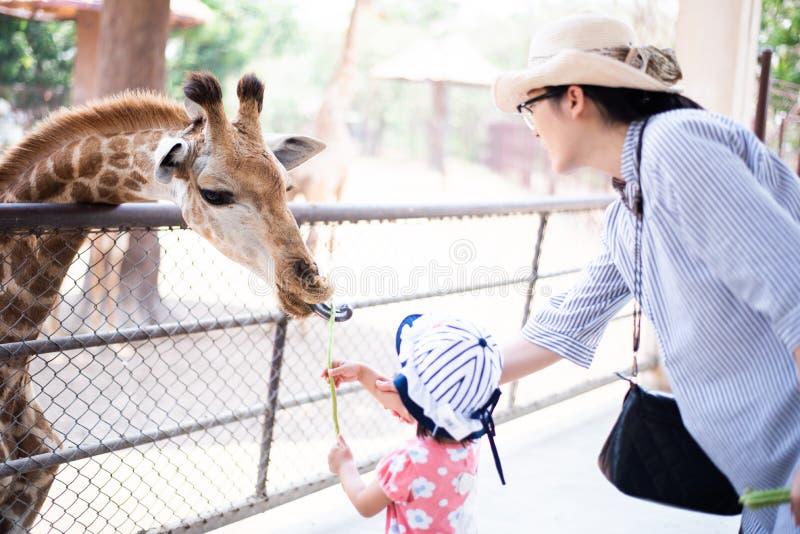 Poca erba della zebra di alimentazione dei bambini fotografia stock