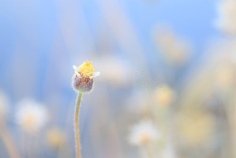 Poca flor fotografía de archivo libre de regalías