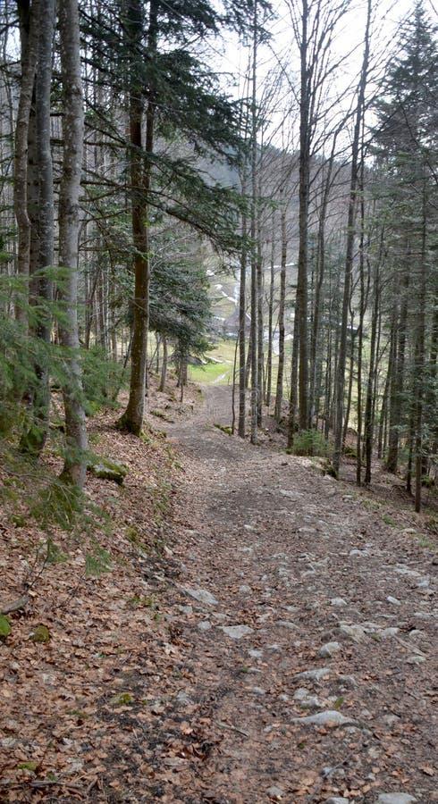 Poca foresta vicino a Grenchen immagine stock libera da diritti