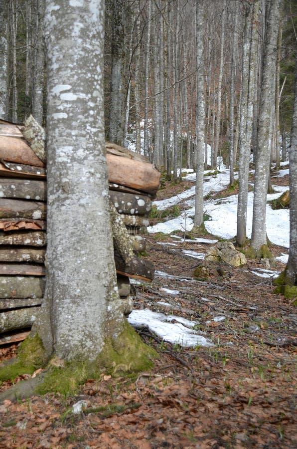 Poca foresta vicino a Grenchen fotografia stock