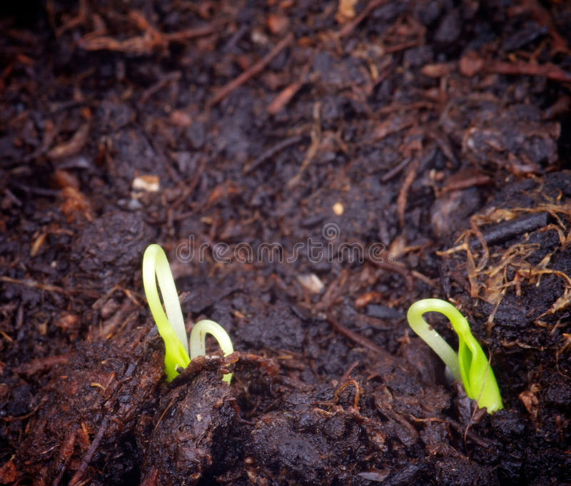 Poca hierba del crecimiento fotos de archivo libres de regalías