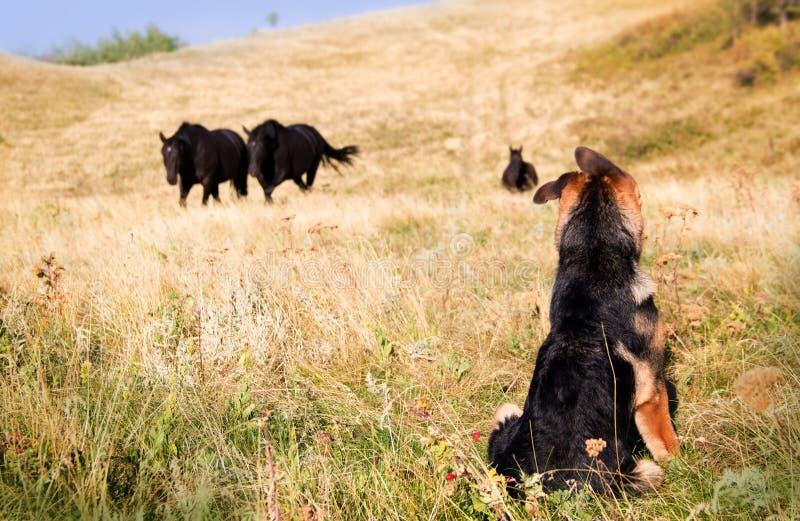 Poca meraviglia del cucciolo del ranch fotografie stock libere da diritti