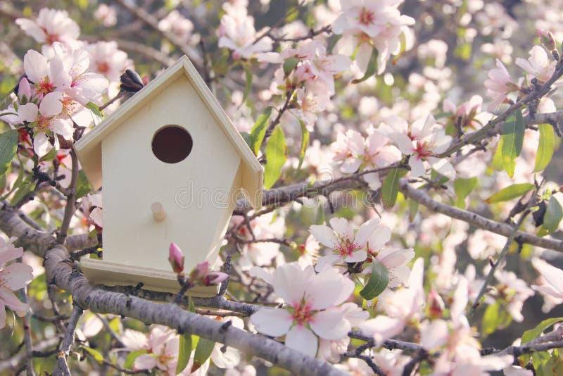 Poca pajarera en primavera sobre cerezo del flor fotos de archivo