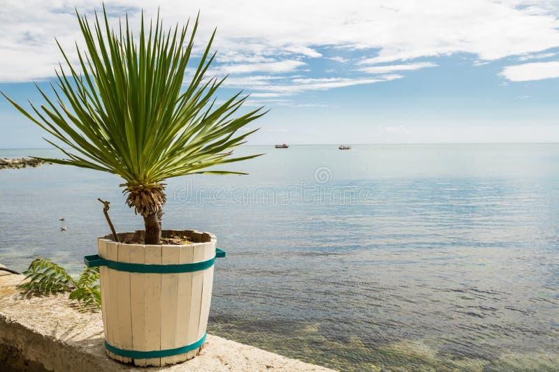 Poca palma in vaso d'annata bianco vicino al mare fotografia stock libera da diritti