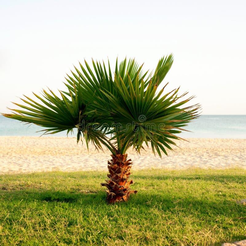 Poca palmera en la playa. imágenes de archivo libres de regalías