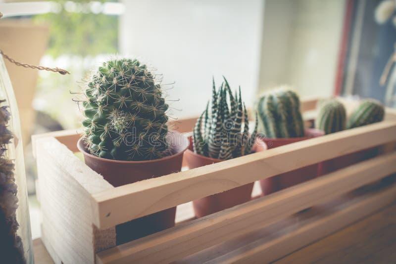 Poca planta del cactus en la maceta fotografía de archivo libre de regalías
