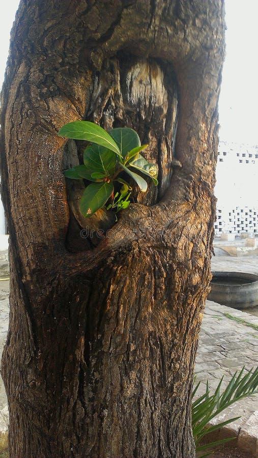 Poca planta en árbol grande fotos de archivo libres de regalías