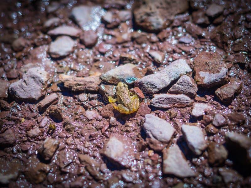 Poca rana di Pirenei nella stazione dello sci di Astun fotografia stock libera da diritti