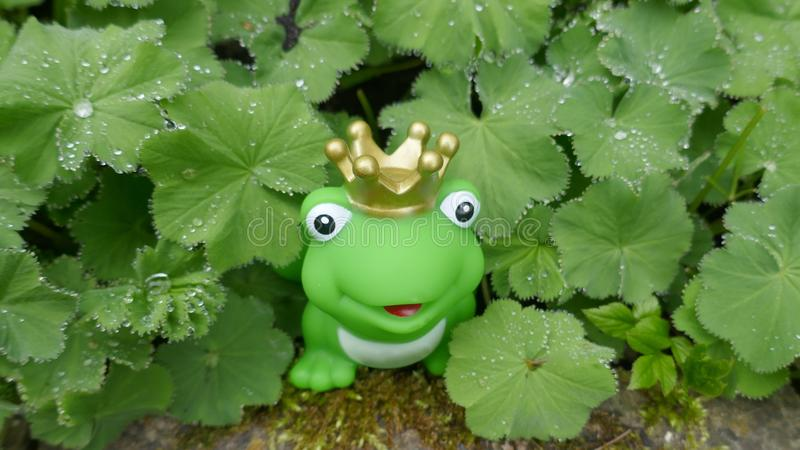 Poca rana verde del juguete con la corona En el jardín, ocultado entre las plantas verdes con las gotas de rocío imagen de archivo