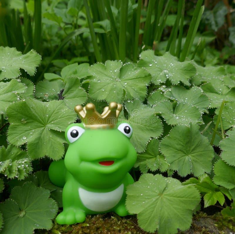 Poca rana verde del juguete con la corona En el jardín, ocultado entre las plantas verdes con las gotas de rocío imágenes de archivo libres de regalías