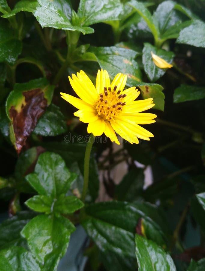 Poca stella gialla fotografie stock