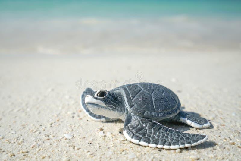 Poca tortuga de mar en la playa arenosa fotos de archivo libres de regalías