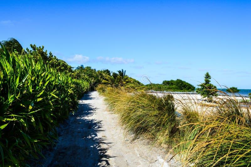 Poca trayectoria con las palmas y las plantas en una isla caribeña, calafate de Caye, Belice fotos de archivo