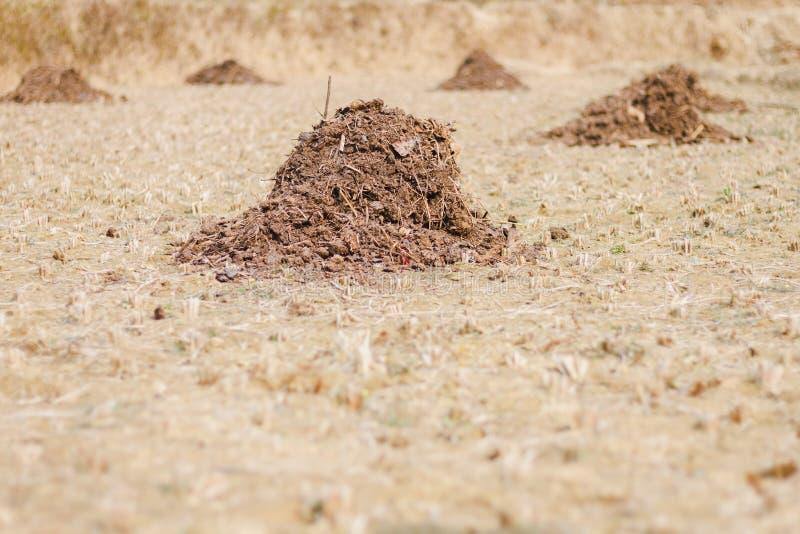 Pochi mucchi di concime nel campo del Nepal immagini stock