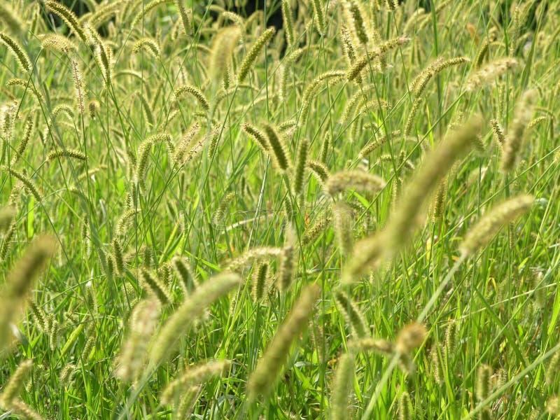 pochodzenie roślin zdjęcia stock