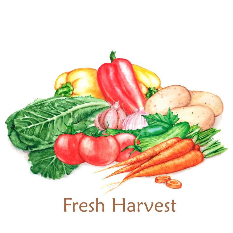 Pociągany ręcznie akwareli ilustracja świeżego żniwa Różni warzywa, odizolowywająca na białym tle ilustracja wektor