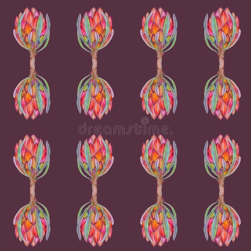 Pociągany ręcznie akwareli ilustracja czerwony protea kwiatu wzór ilustracja wektor