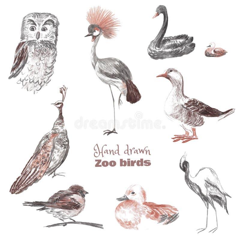Pociągany ręcznie nakreślenie ptaki zoo royalty ilustracja