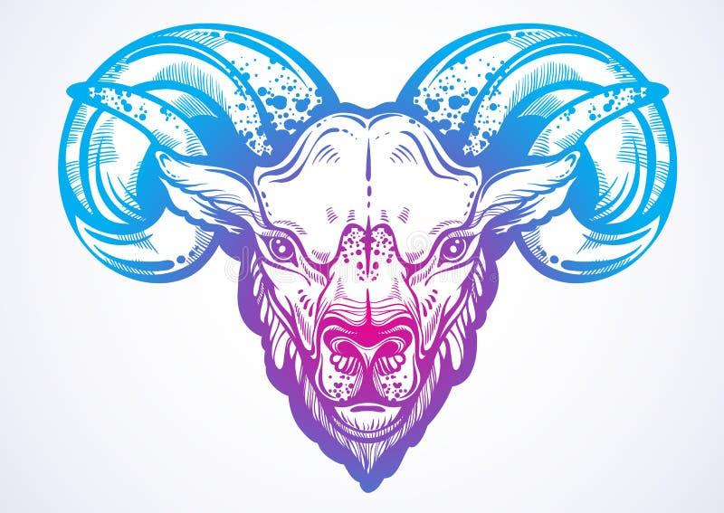 Pociągany ręcznie piękna grafika baran Wyszczególniający liniowy stylowy wizerunek Animalistyczna wektorowa ilustracja odizolowyw royalty ilustracja