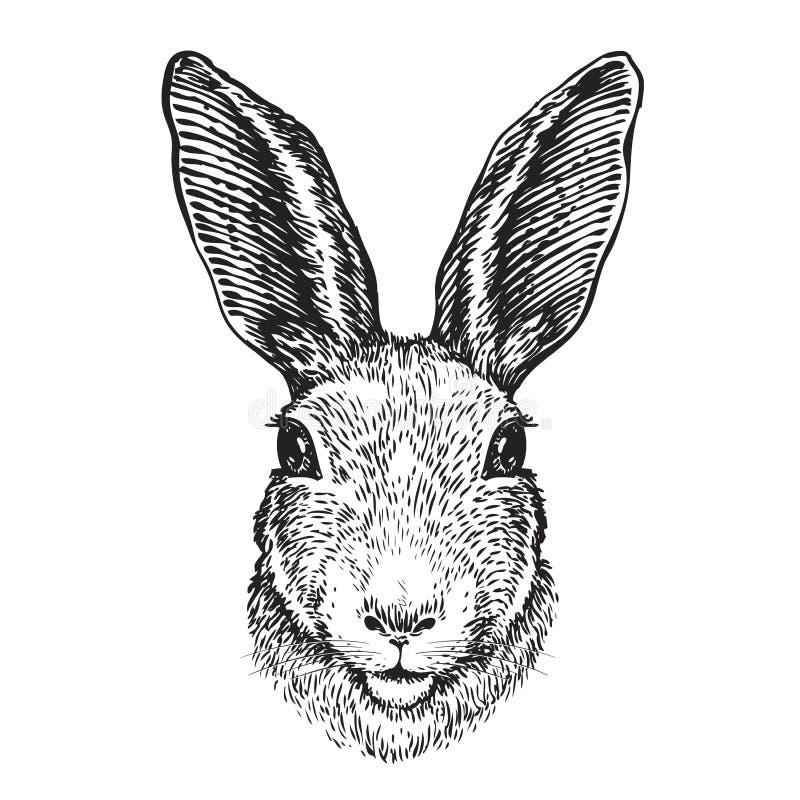 Pociągany ręcznie portret królik Wielkanocny królik, nakreślenie również zwrócić corel ilustracji wektora ilustracji