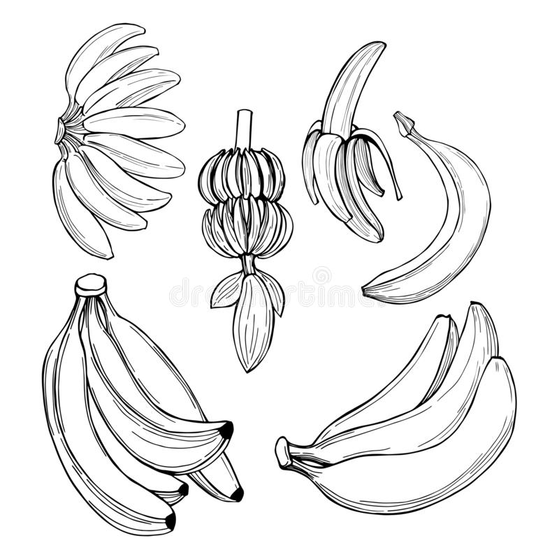 Poci?gany r?cznie owoc Banany r?wnie? zwr?ci? corel ilustracji wektora royalty ilustracja