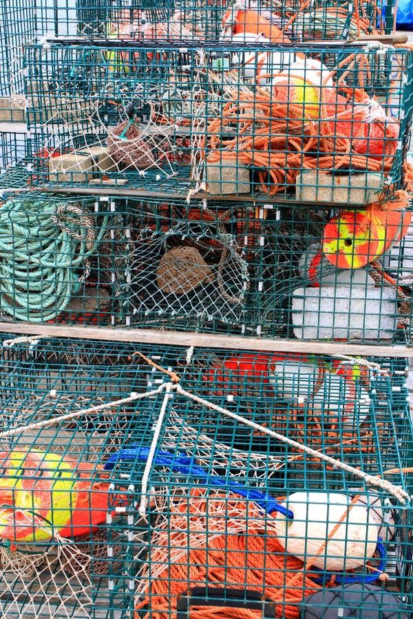pociesza homarów kolorowych oklepów obrazy royalty free