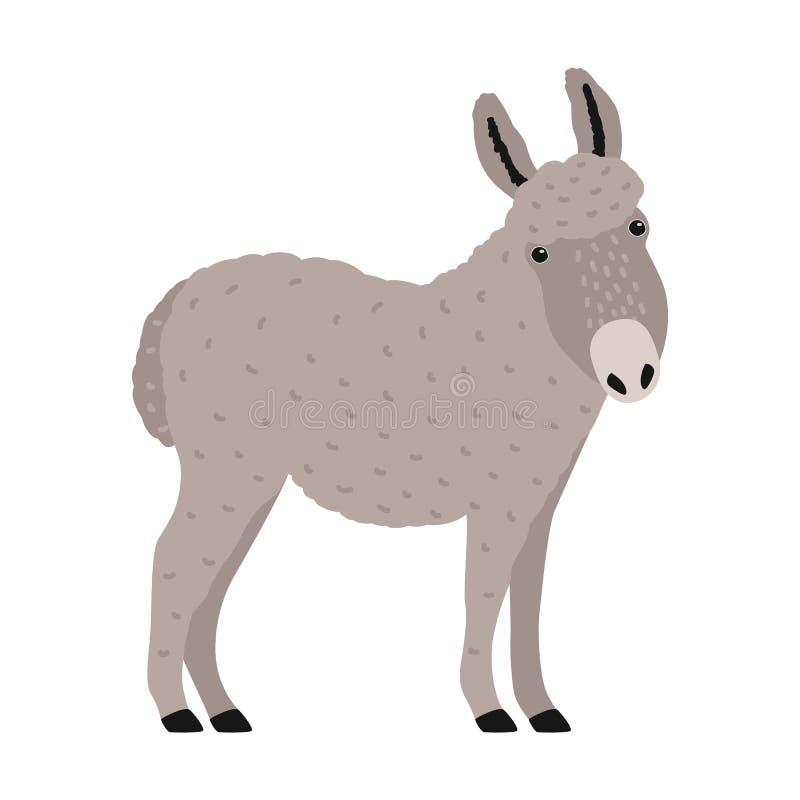 Pocieszny popielaty osioł, osioł lub burro odizolowywający na białym tle, Portret uroczej kreskówki domowy pracujący zwierzę ilustracja wektor