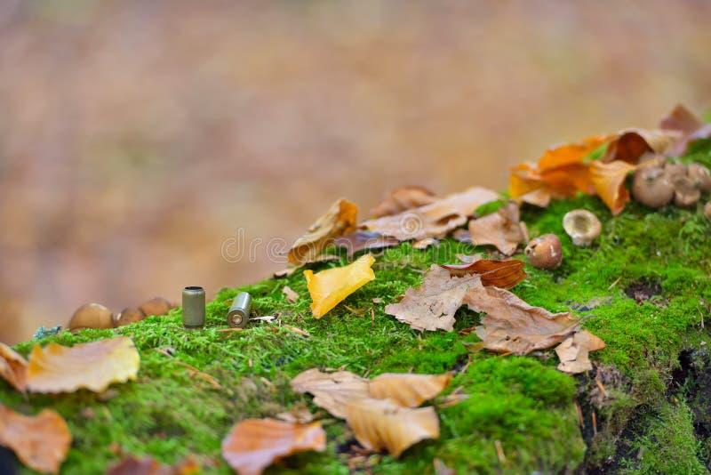 Pocisk obudowy posypywać na lasowym podłoga zakończeniu up, jesień barwią obraz royalty free