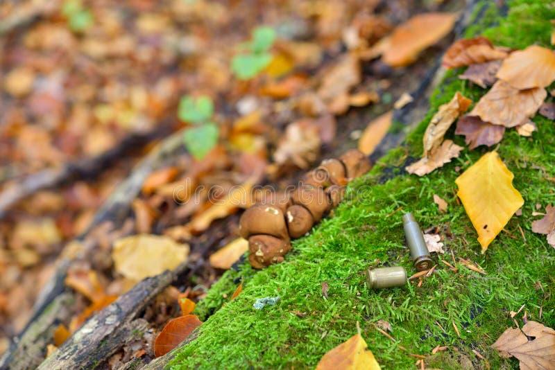 Pocisk obudowy posypywać na lasowym podłoga zakończeniu up, jesień barwią zdjęcia royalty free