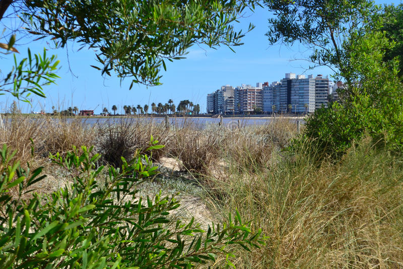 Pocitos de Playa foto de stock royalty free