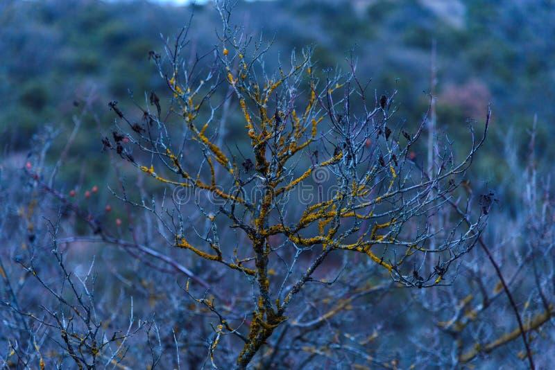 Poco árbol con el musgo amarillo en él imagen de archivo