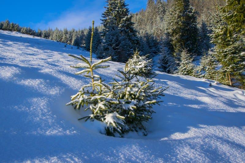 Poco árbol de abeto cubierto por la nieve fresca imagenes de archivo