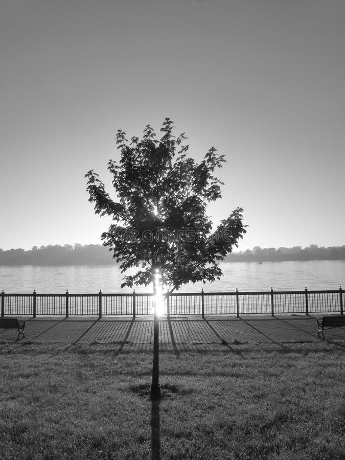 Poco albero fotografia stock