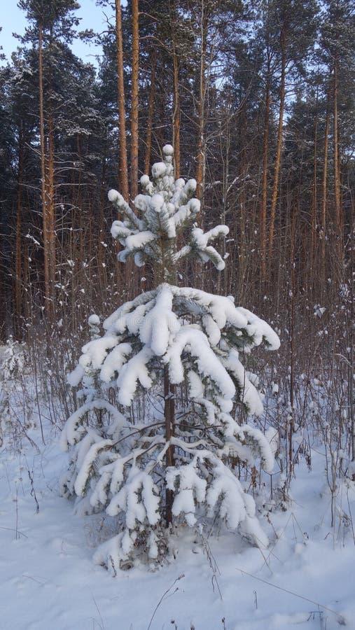 Poco albero nella neve fotografia stock libera da diritti