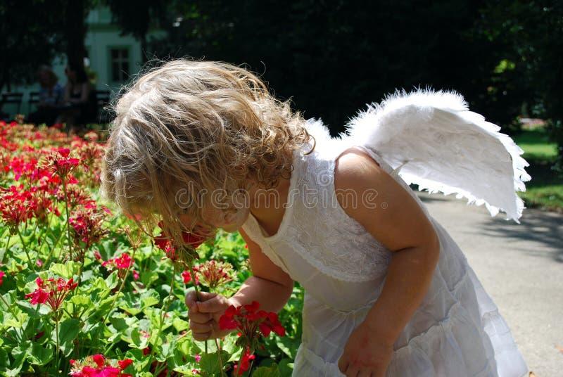 Poco angelo fotografie stock libere da diritti
