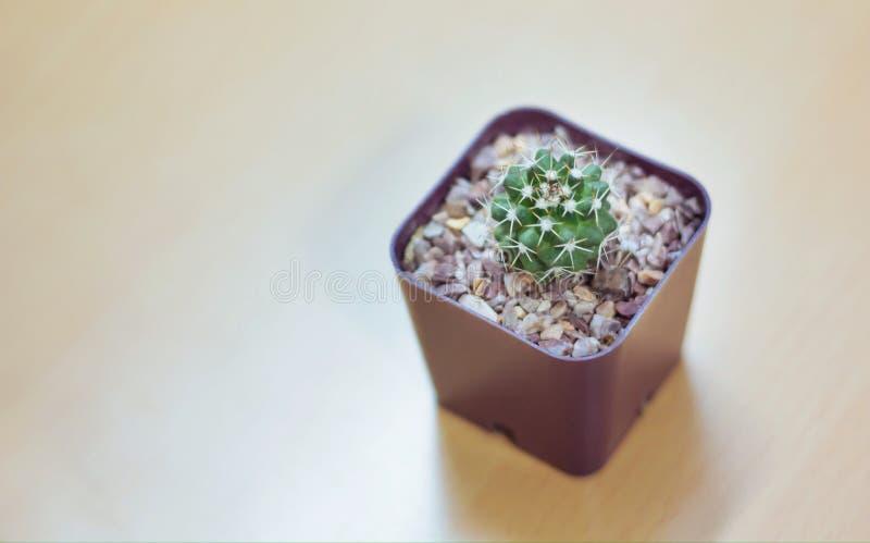 Poco cactus fotografia stock libera da diritti