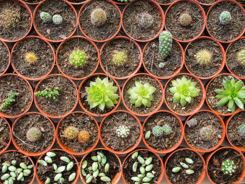 Poco cactus dispuesto fotos de archivo