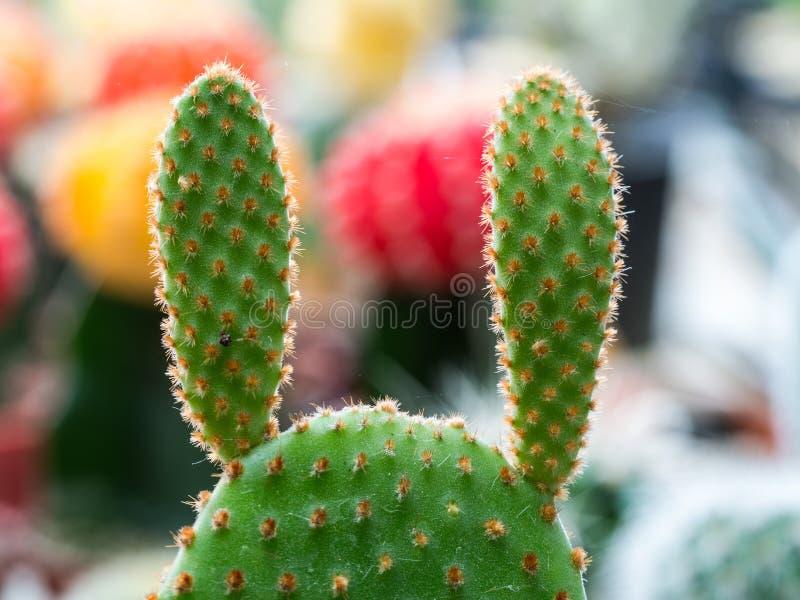 Poco cactus en el jardín foto de archivo libre de regalías