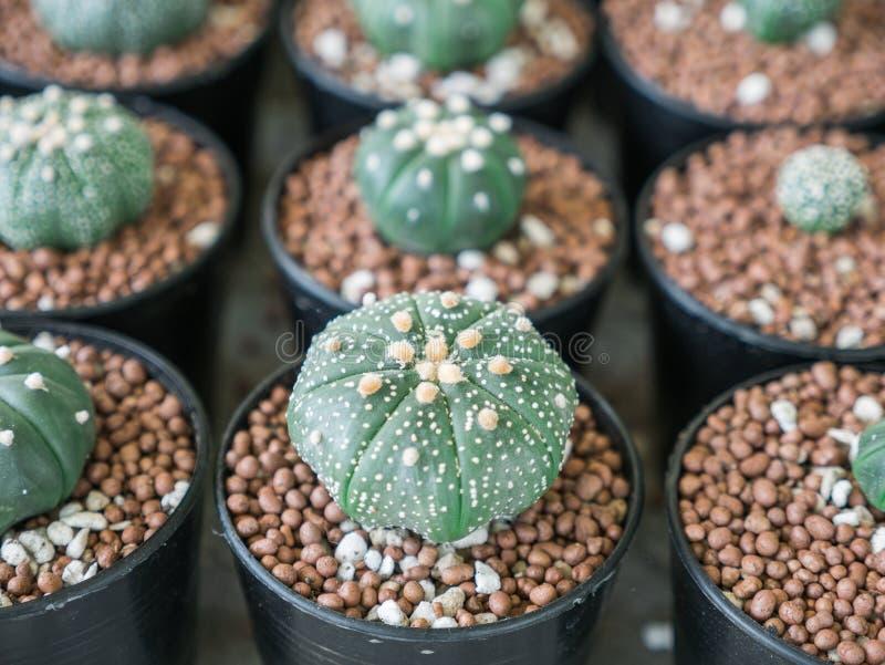 Poco cactus en el pote imagen de archivo