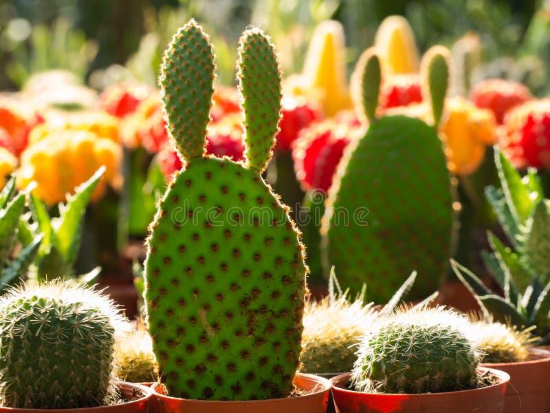 Poco cactus en maceta imagenes de archivo