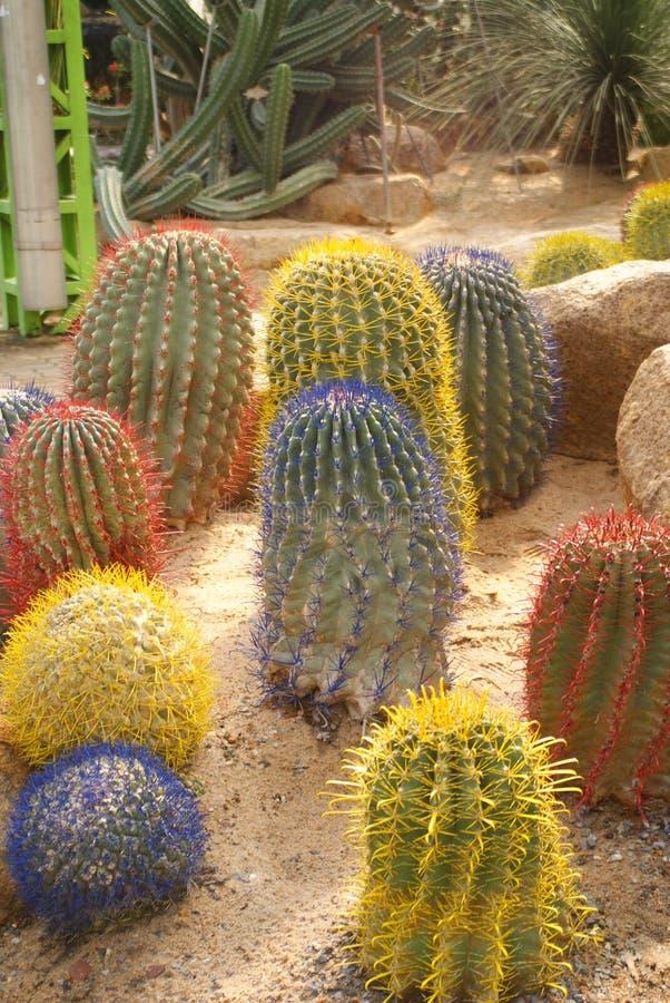 Poco cactus variopinto sulla sabbia al parco del nongnuch, Pattaya, Tailandia fotografia stock libera da diritti