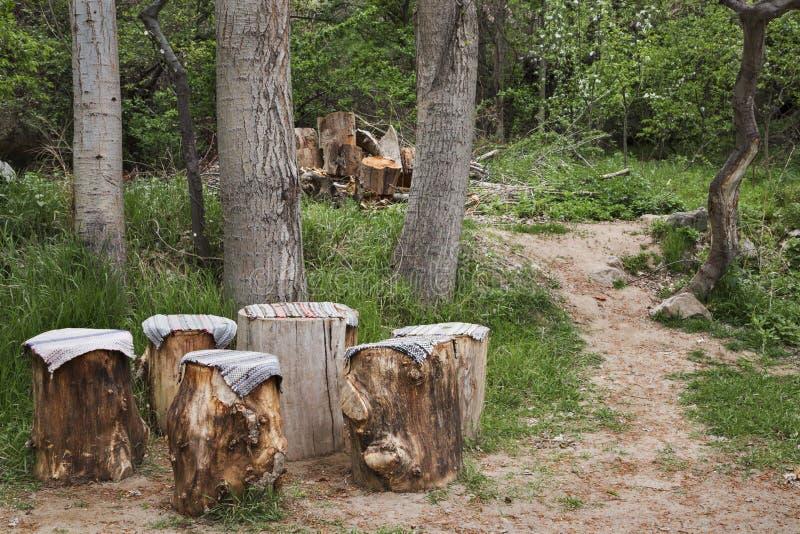 Poco caffè dei tronchi di albero fotografie stock