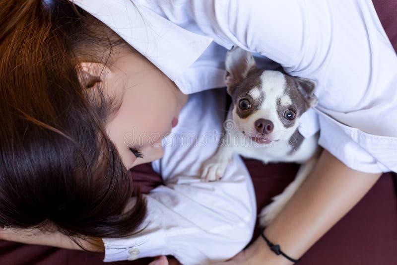 Poco cane sta proteggendo il suo proprietario mentre sonno asiatico grazioso della donna fotografie stock libere da diritti
