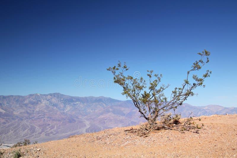 Poco cespuglio a Death Valley fotografie stock libere da diritti