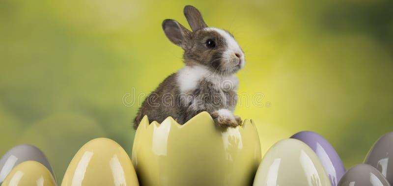 Poco conejo lindo del bebé, día de fiesta animal de Pascua, huevos y fondo verde foto de archivo libre de regalías