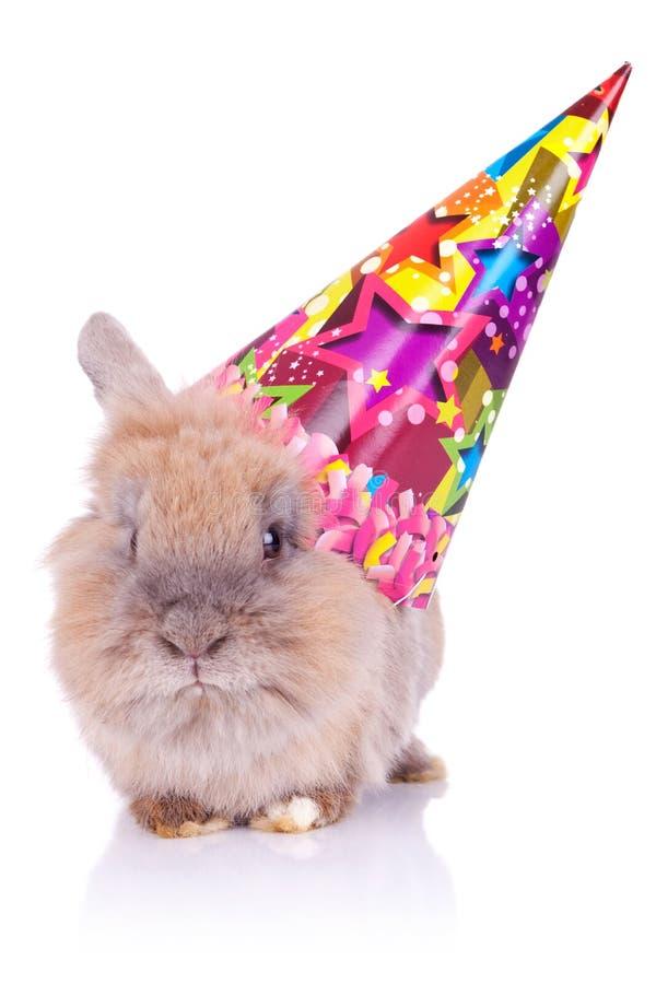 Poco conejo lindo del cumpleaños imágenes de archivo libres de regalías