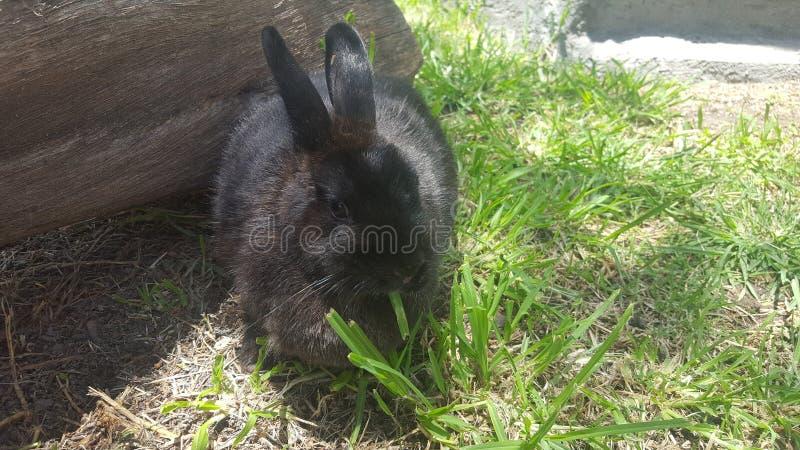 Poco coniglietto fotografia stock libera da diritti
