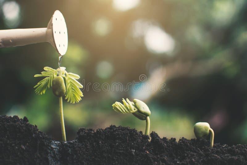 Poco crescere della pianta verde immagine stock libera da diritti
